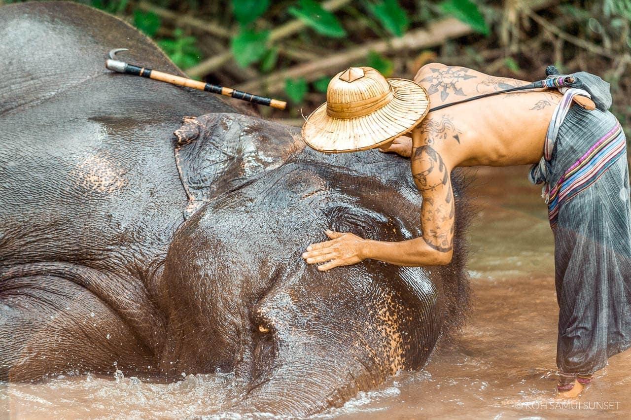 elephants thailand need