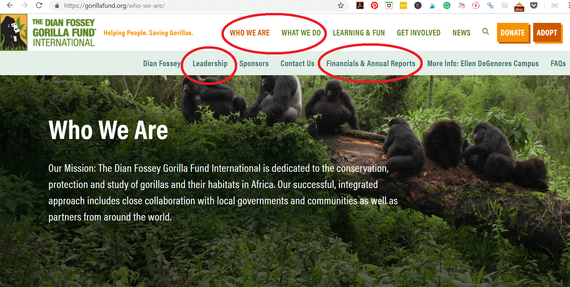 vet ethical volunteering organization dian fossey gorilla fund