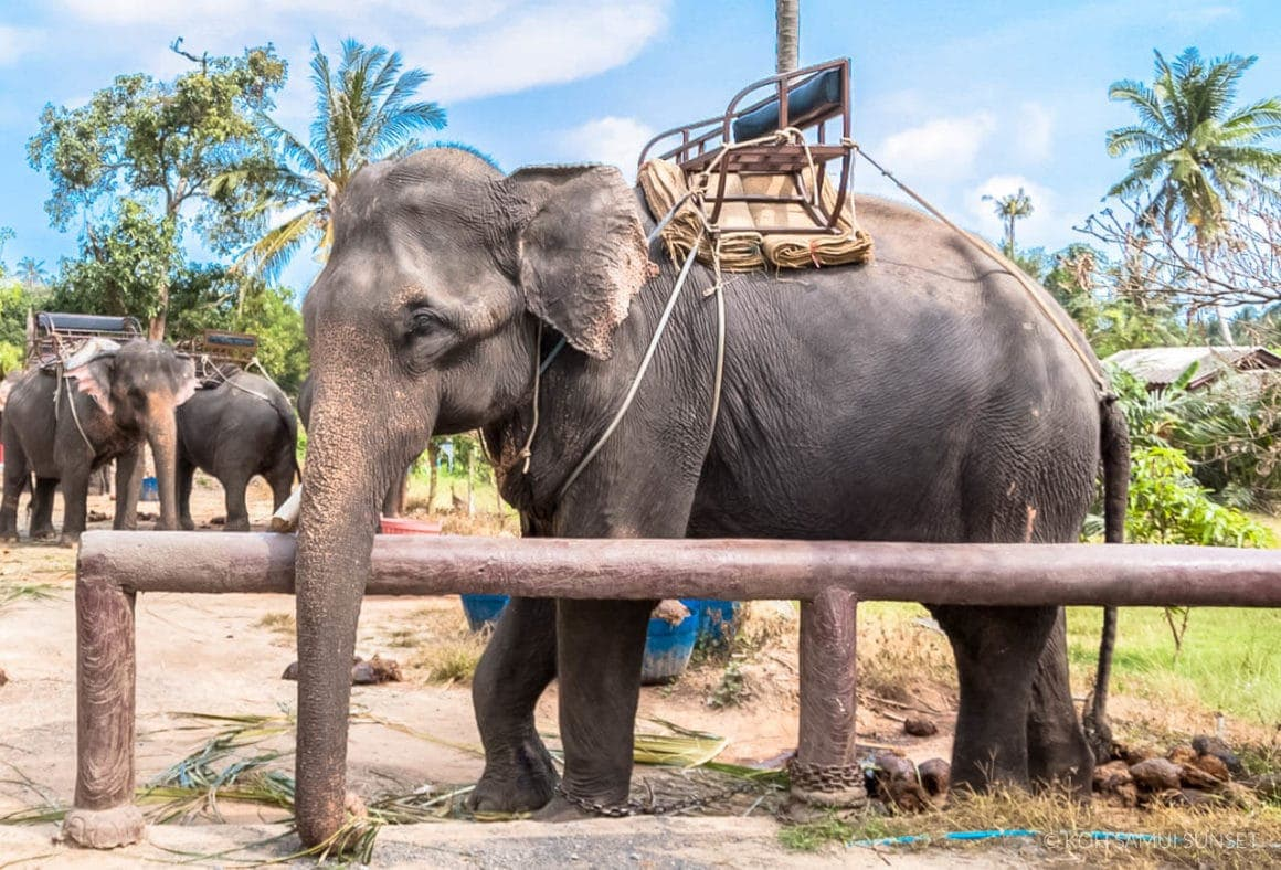 voluntourism dont ride elephant thailand