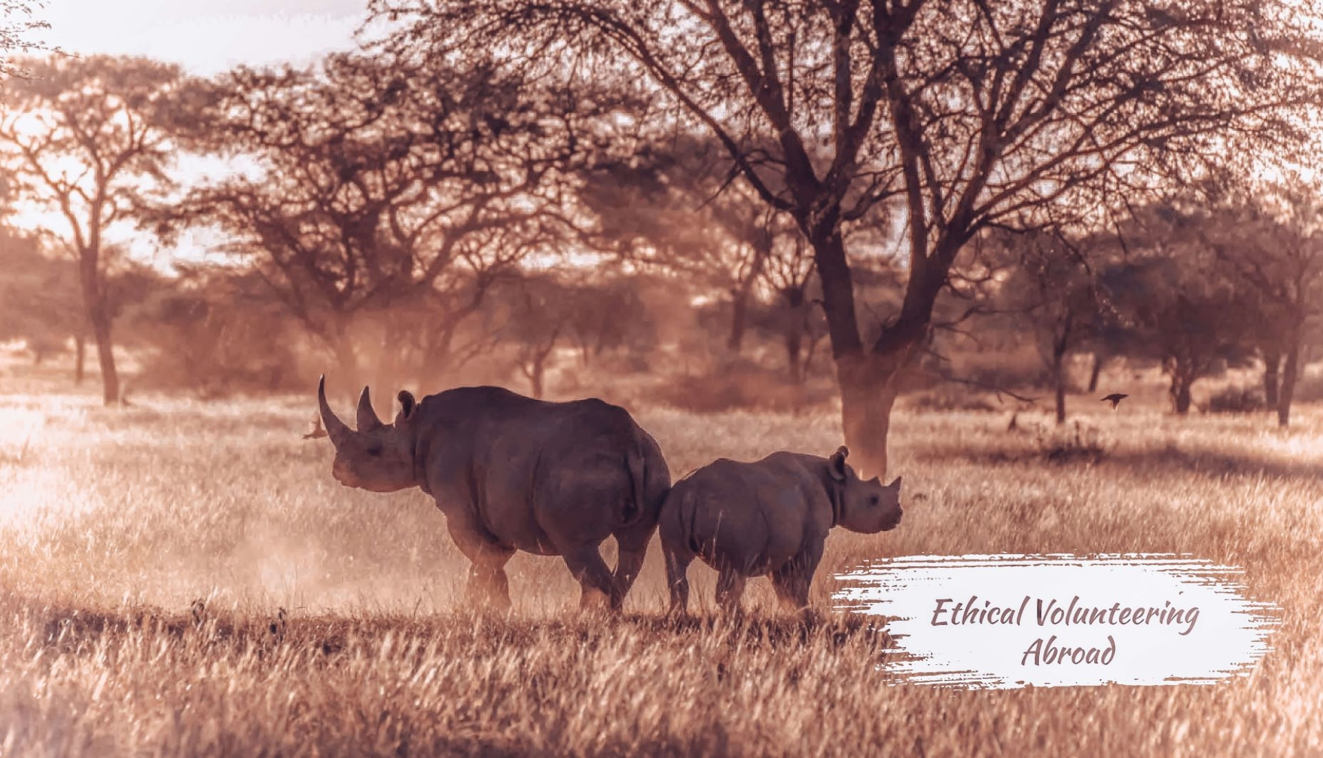 Ethical-volunteering-abroad-animal-sanctuary-rhinos