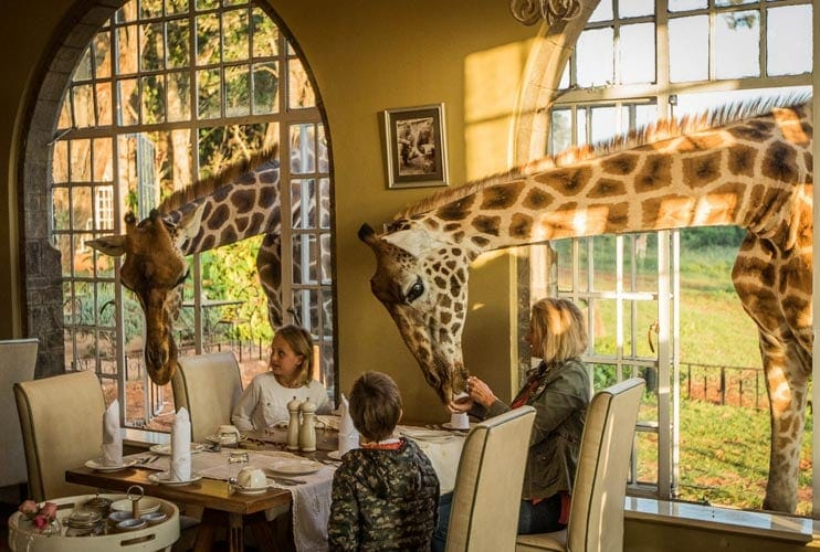 Giraffe Breakfast Sunroom Giraffe Manor Kenya