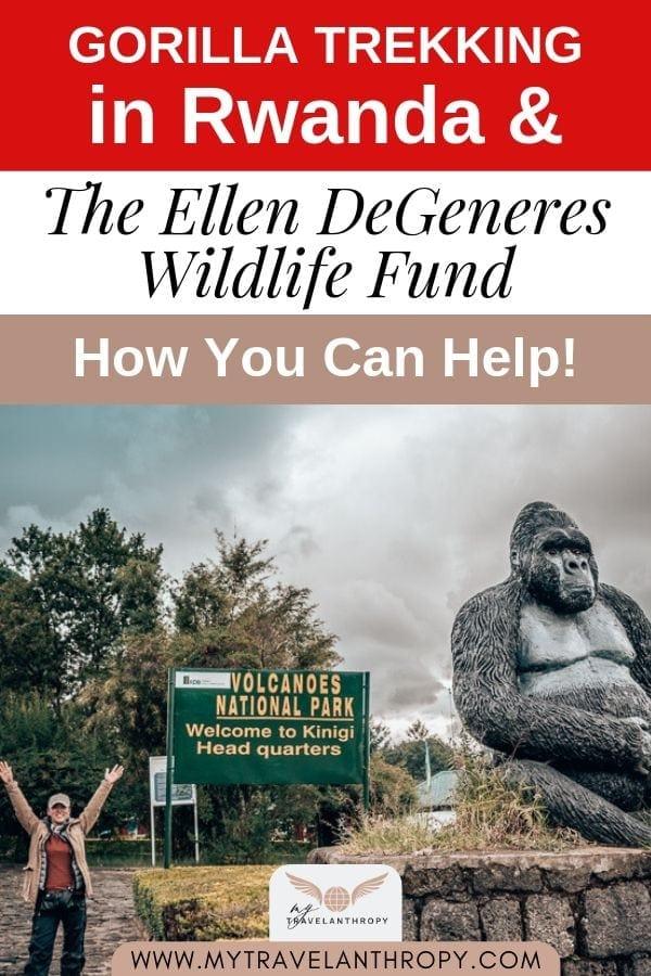 Gorilla trekking rwanda ellen degeneres fund