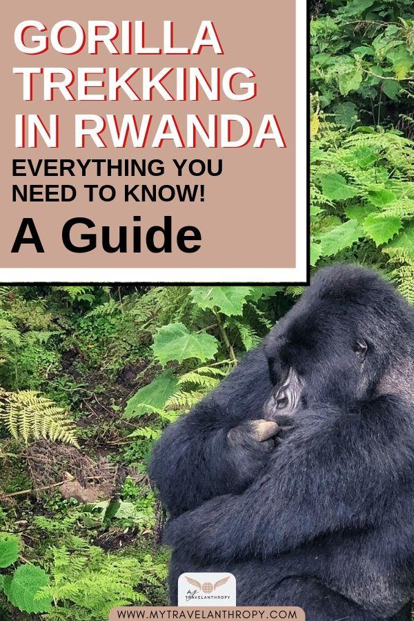 gorilla trekking rwanda guide