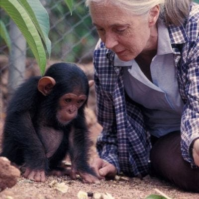 My Visit to The Jane Goodall Institute Chimp Eden for Endangered Chimpanzees, South Africa